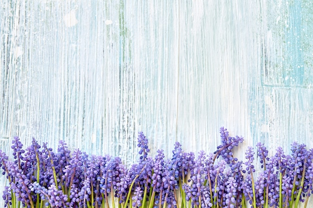 青い木製の背景に青いムスカリの花。 Premium写真