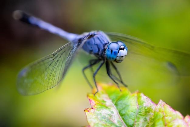 背景をぼかした写真の緑の植物に青い翼のある昆虫 無料写真