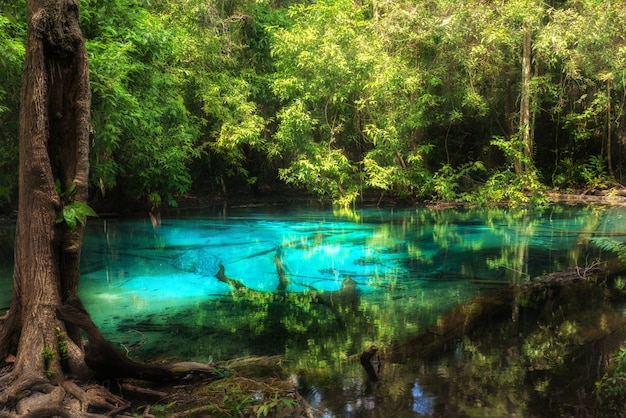 Blue pool at emerald pool is unseen pool in mangrove forest at krabi in thailand. Premium Photo