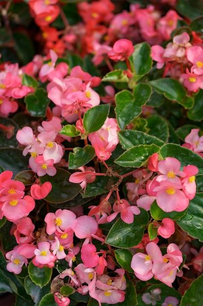 블루밍 핑크가 제라늄 추상 텍스처 무료 사진