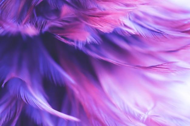 Blur bird chickens feather texture for background Premium Photo