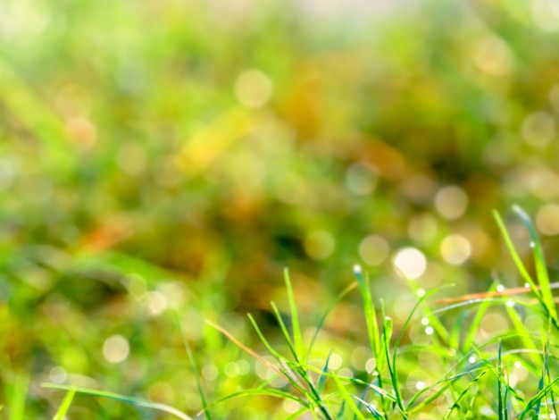 Blur grass dew drop was fall on leaves and light in sunrise Premium Photo