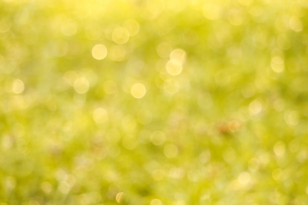 Blur grass in garden water drop on leaves in morning Premium Photo