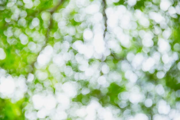 Blur green bokeh nature abstract background Premium Photo