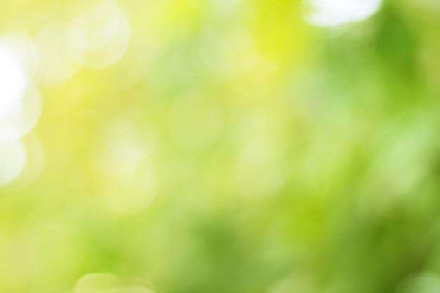 Blur из листьев дерева на фоне природы Premium Фотографии