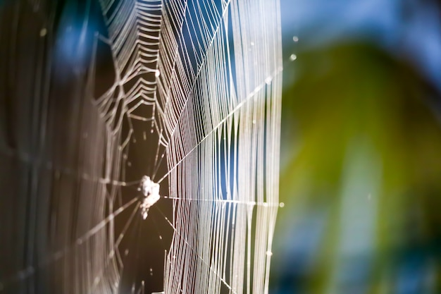 Blur spiders web for manipulate to trap prey on tree in the garden Premium Photo
