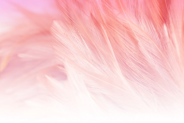 Blur styls and soft color of chickens feather texture for background, abstract colorful Premium Photo