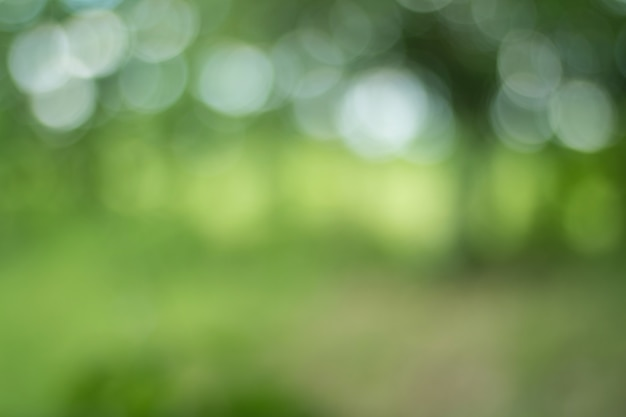 Blur of tree leaves for nature background Premium Photo