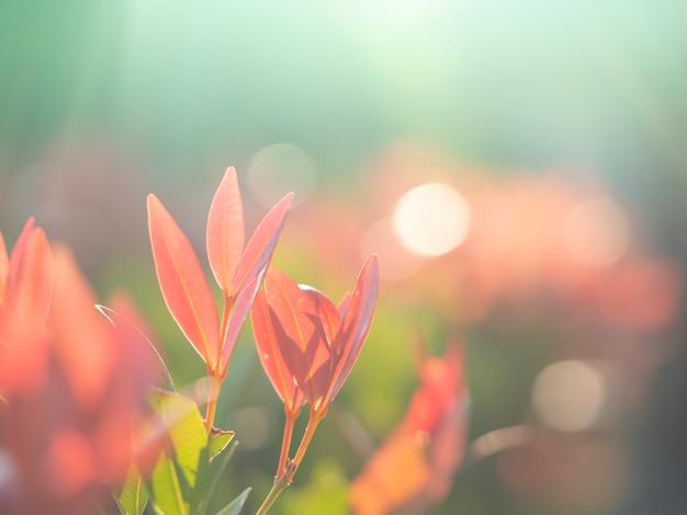 抽象的なbluredとソフトフォーカスの葉 Premium写真