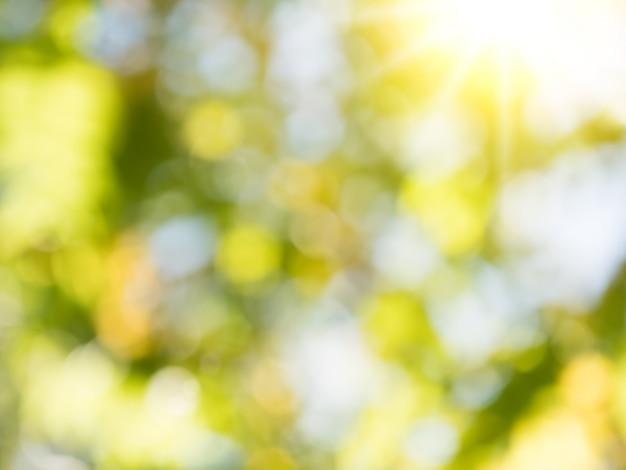 緑blured抽象的な背景 Premium写真