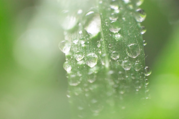 Blurred background with green leaf and raindrops Free Photo