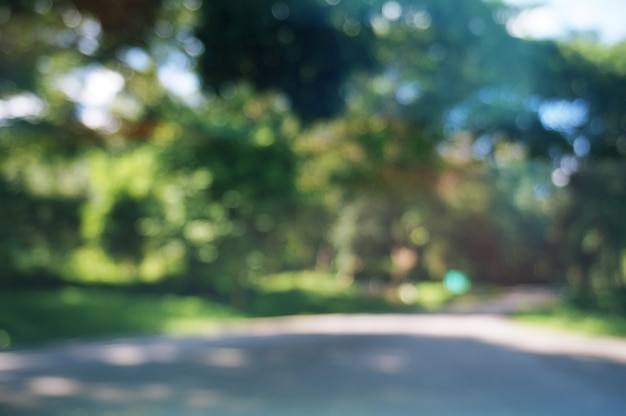 Blurred Of Beautiful Nature Green Tree Forest Background