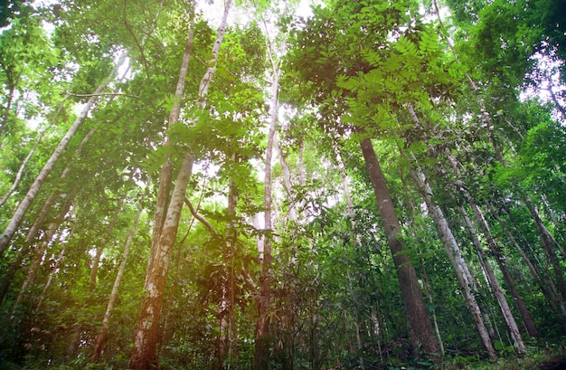 Blurred Of Beautiful Nature Green Tree Forest Background With Copy