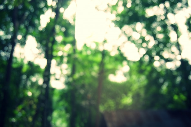 Blurred Of Beautiful Nature Green Tree Forest Background Photo