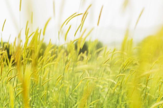 Затуманенное трава на ветру Бесплатные Фотографии