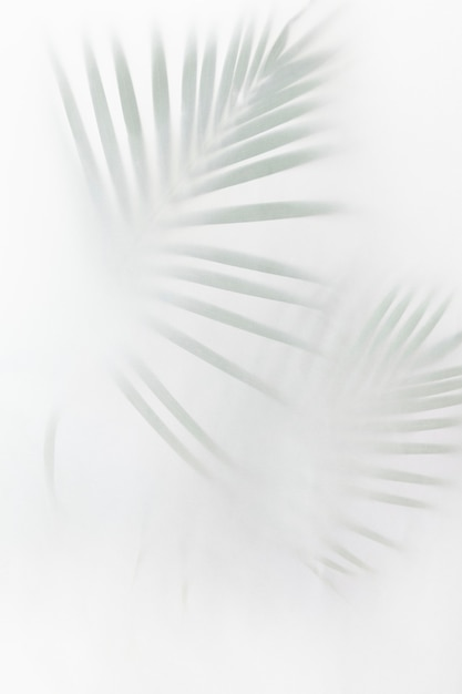Blurred green palm leaves on off white Free Photo