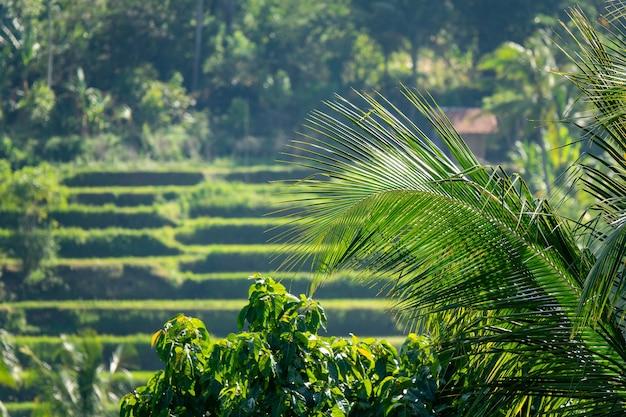 테라스 농장의 흐릿한 샷 무료 사진