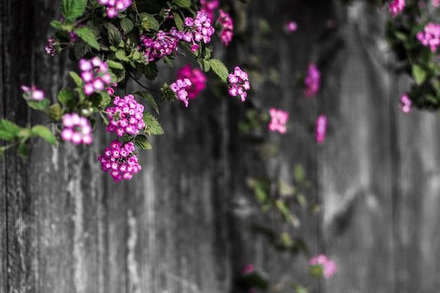 美しい紫色の花の花春夏自然の木製blurt背景 Premium写真