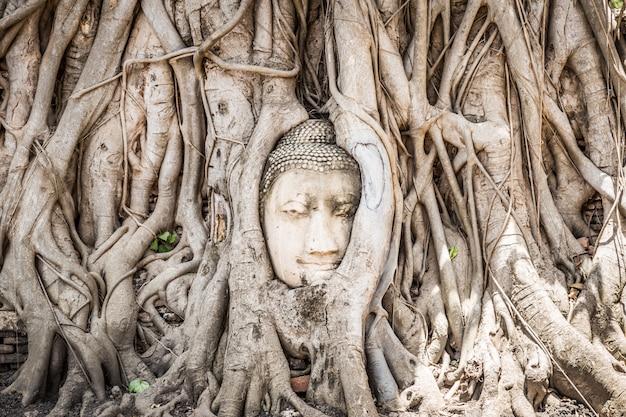 タイのアユタヤ歴史公園のbo提樹の根に閉じ込められた仏頭像 Premium写真