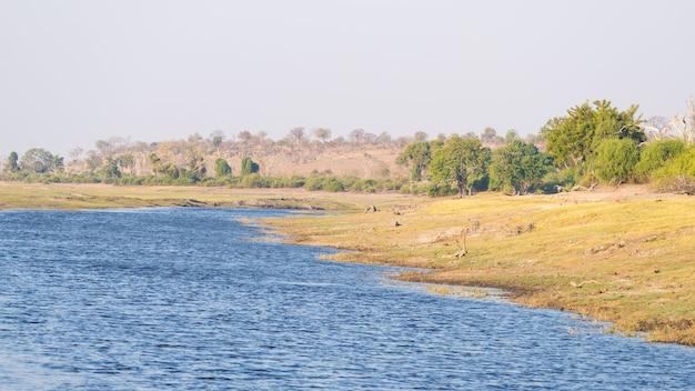 ナミビアのチョベ川でのボートクルーズと野生動物サファリ Premium写真
