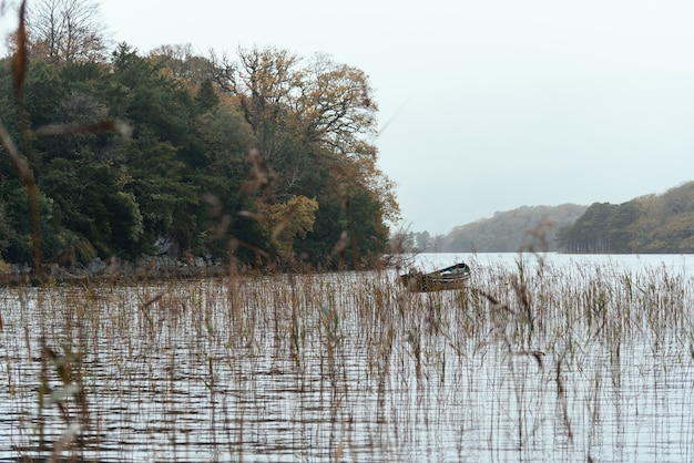 植物や木々に囲まれた湖でのボート 無料写真