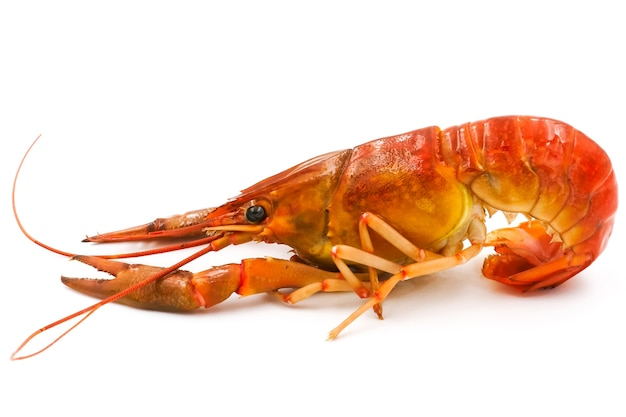 Boiled crayfish or freshwater lobster on a white background. Premium Photo