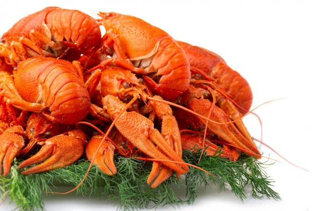 Boiled crayfish with dill isolated on white Premium Photo
