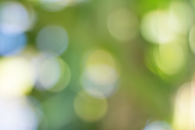 Bokeh of tree leaves for nature background and save green concept Premium Photo