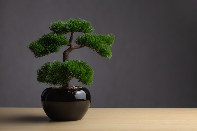 Bonsai on the desk. the backdrop is a dark gray background. Premium Photo
