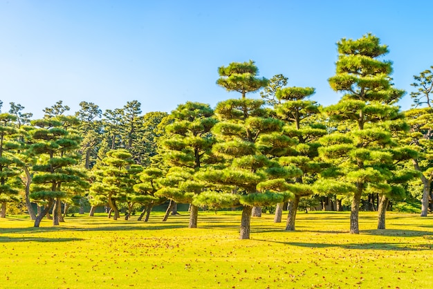 Bonsai tree in the garden of imperial palace at tokyo city japan Free Photo