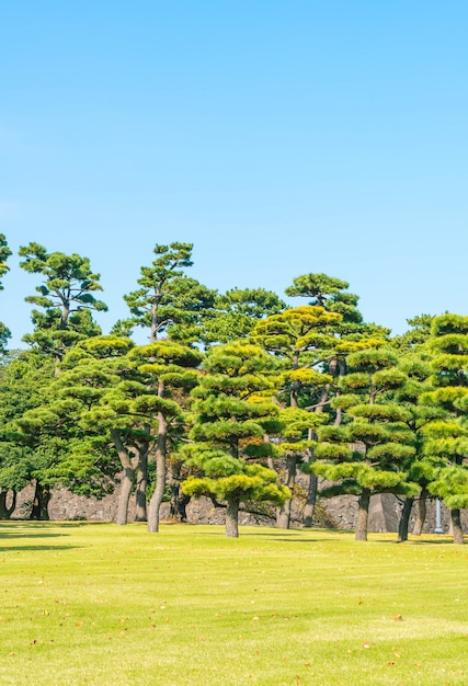 Bonsai tree in the garden of imperial palace at tokyo city Free Photo