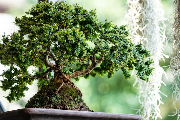 Bonsai tree in the garden Premium Photo