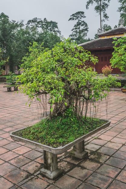 Дерево бонсай в буддийском храме Premium Фотографии