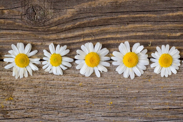 Border of daisy chamomile flowers on wooden table. view with copy space Premium Photo