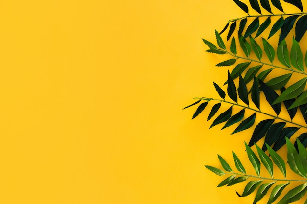 Border green leaves on yellow with copyspace Free Photo