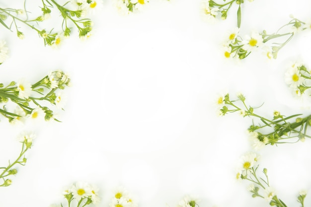 Border made of daisy white flowers Premium Photo