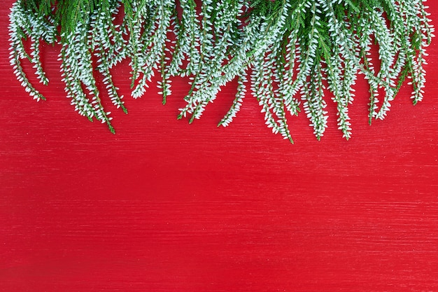 Border of white common heather on red background. copy space, top view. Premium Photo
