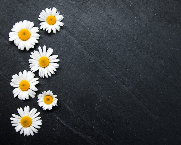 Border with camomile Premium Photo