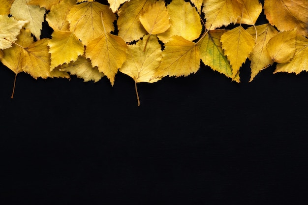 Border of yellow birch leaves with  on black background Premium Photo