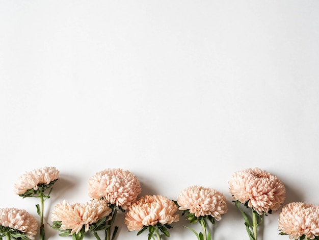 Botanical floral border of autumn seasonal flowers - peach asters on  white background. top view. copy space Premium Photo