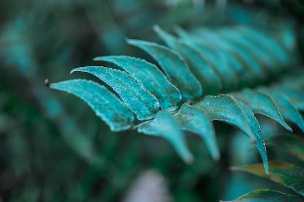 Botanical leaves Free Photo
