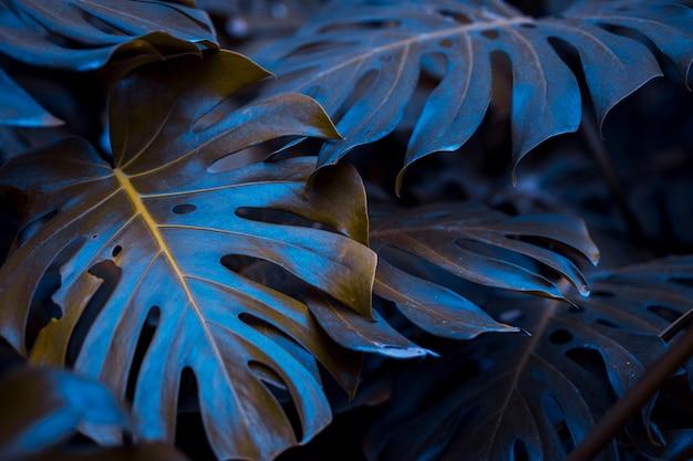 Botanical monstera leaves Free Photo