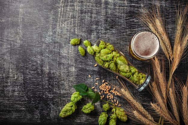 A bottle of beer with green hops, oat, wheat spikelets, opener and glasses with dark and light beer on black scratched chalk board Premium Photo