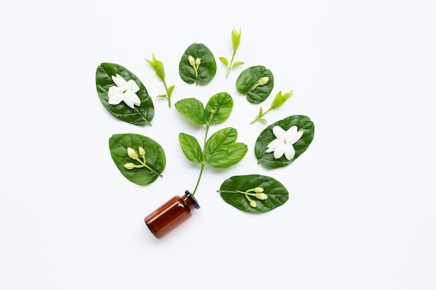 Bottle of essential oil with jasmine flower and leaves on white. Premium Photo