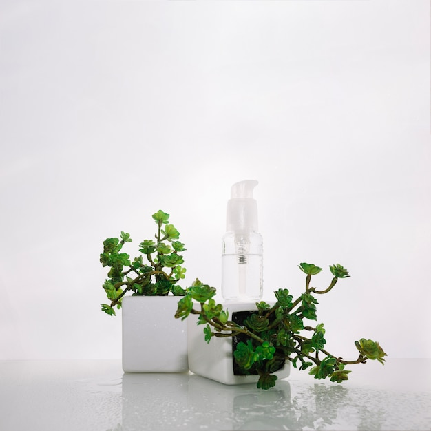 Bottle of lotion on potted plant Free Photo