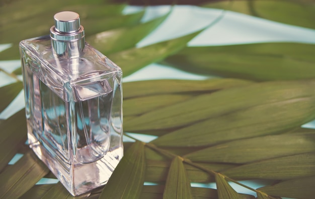 Bottle of perfume on the green palm leaf Premium Photo