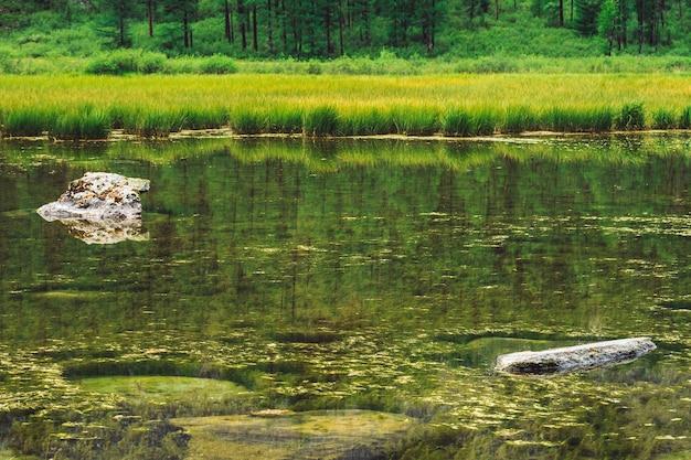 돌과 이끼가있는 산 호수의 늪지대 밑바닥 프리미엄 사진