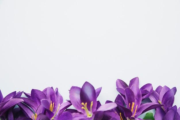 Bottom purple flowers isolated on white background Photo ...