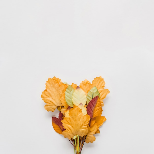 Bouquet of autumn leaves on white background Free Photo