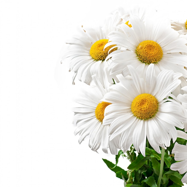 Bouquet of daisies flowers on white isolated Free Photo